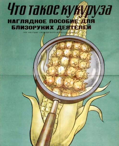 Кукуруза – королева полей
